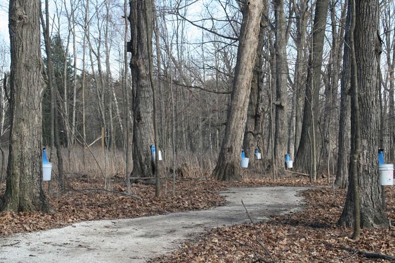 Maple Forest Habitat