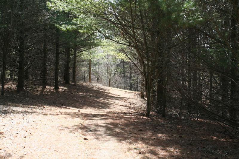 Pine Forest Habitat